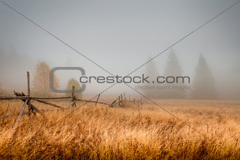 Autumn field in the morning