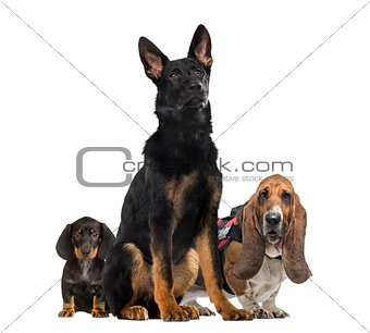Small and big dogs sitting, isolated on white