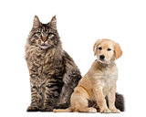 Dog and cat sitting, isolated on white