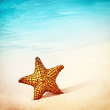 Beautiful starfish background