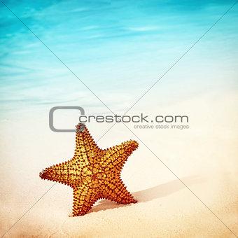 Beautiful starfish background