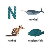 Letter N. Cartoon alphabet for children. vector illustration animal numbat, narwhal, napoleon fish