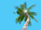Tropical palm tree under blue sky