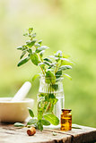 Peppermint and peppermint essential oil
