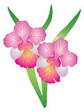 Singapore Orchid Vanda Miss Joaquim Illustration