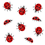 Ladybugs on a white background