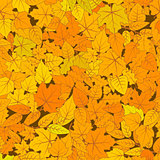 Cute hand drawn leaves from different kind of trees, autumn seamless pattern