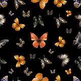 butterfly s. black