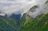 Mountain forest in the fog, cloud. Nepal, Annapurna region, Mardi Himal track.