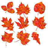Colorful leaf background, eps10 vector