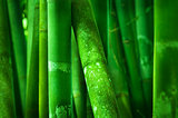 Close up on bamboo tree