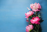 Fresh peonies on blue