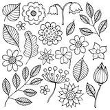 Drawings of flowers and leaves theme 1