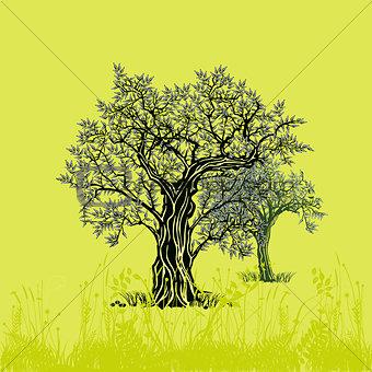 Olive trees on olive illustration