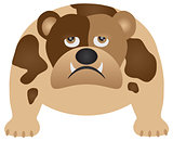 English Bulldog Color Illustration