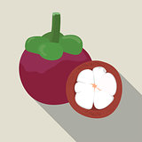 Mangosteen isolated, Mangosteen icon, vector illustration.