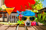 cocktail drink dog summer holiday vacation on balcony