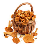 Raw Chanterelles Mushrooms