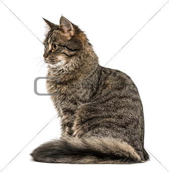 Cat sitting looking away, isolated on white