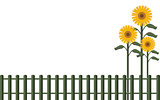 Background fence and sunflowers