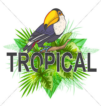 Green palm leaves and toucan