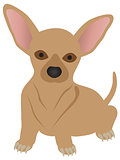 Chihuahua Dog Illustration