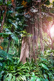 trees and lianas in the jungle