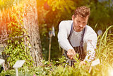 Man cutting plants