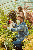 People fertilizing plants in greenhouse