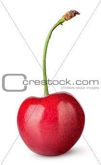 Single sweet cherry vertically