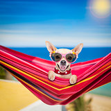 dog on hammock in summer