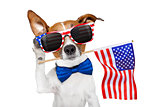 dog listening on 4th of july