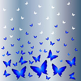 White butterflies with a shadow on a blue background