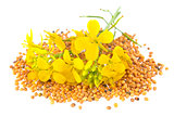 Flowers and seeds of mustard