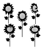 set of sunflowers silhouette 3