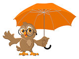 Owl bird holds open umbrella