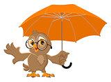 Owl bird holds open umbrella
