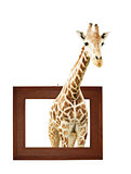 Giraffe in wooden frame with 3d effect