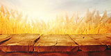Wheat field in summer with planks