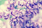 Vintage lilac flowers