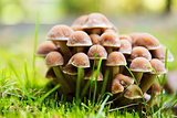 Group of fresh natural edible mushrooms in autumn forest