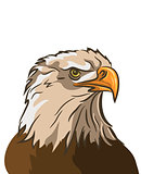 eagle isolated on white background. vector