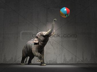 An elephant plays