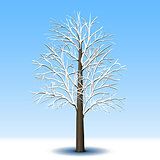 detached tree without leaves in frost