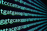 Sequencing the gene.