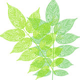 Tree leaves pattern illustration