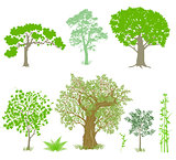 Decorative deciduous trees illustration