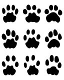 Black footprints of leopard