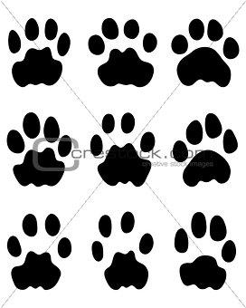 Black footprints of leopard