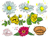 Set of summer flowers. Camomile, yellow rose, empty basket